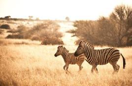 Sfeerimpressie rondreis Botswana