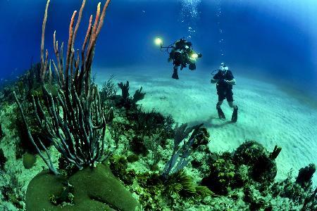 De beste duikplekken in Egypte