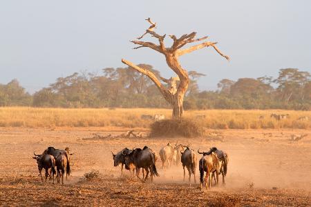 Sfeerimpressie rondreis Kenia