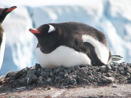 Filmpje van de prachtige Antarctische wereld