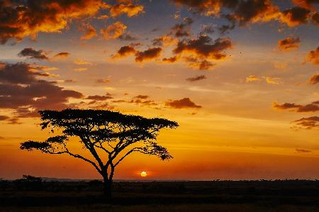 Sfeerimpressie rondreis Zuid-afrika
