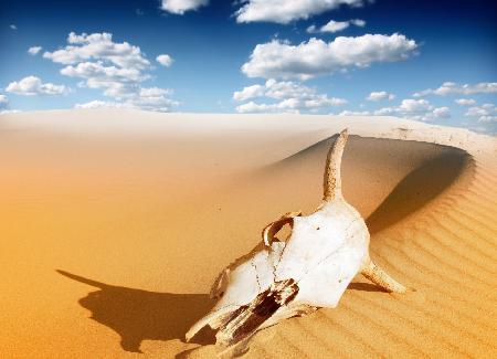 Sfeerimpressie rondreis Namibie