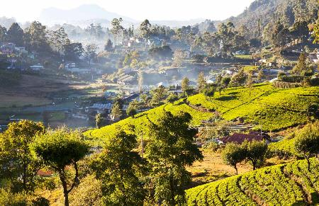 Sfeerimpressie rondreis Sri lanka