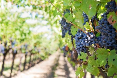 De tien beste wijnvakanties in Europa