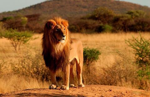 Sfeerimpressie 9-daagse safari Best of Kenya