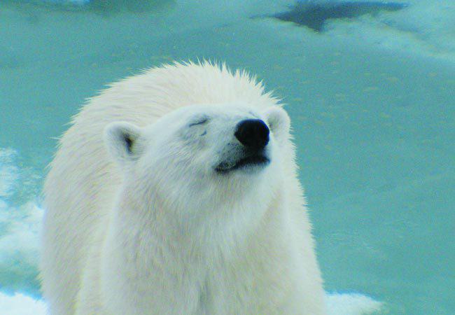 Sfeerimpressie Spitsbergen, IJsberen en Geysers