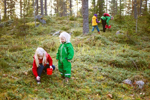 Sfeerimpressie 15-daagse fly drive Noord-Zweden
