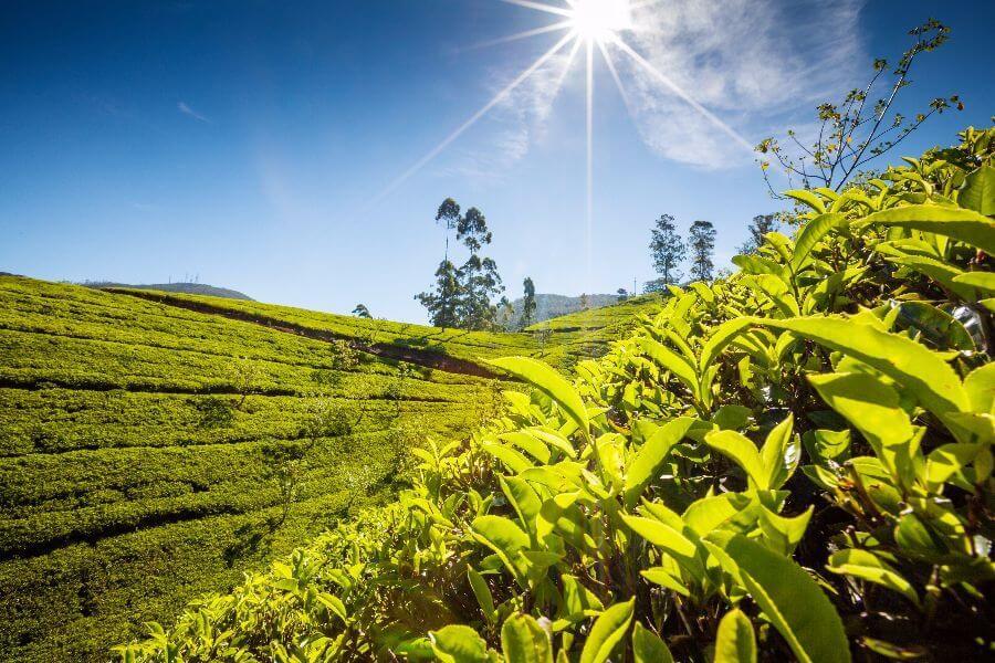 Sfeerimpressie 16-daagse rondreis Sri Lanka