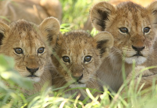 Sfeerimpressie 9-daagse privé rondreis met gids/chauffeur Safari en Zanzibar