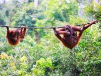 Sfeerimpressie Rondreis Maleisie & Borneo