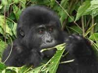 Sfeerimpressie Avontuurlijke lodgesafari Masai Mara & Gorillas