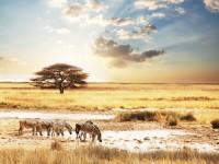 Sfeerimpressie Kampeersafari van Kenia tot Zuid-Afrika