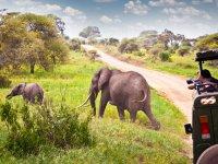 Sfeerimpressie Zanzibar & Selous natuurreservaat