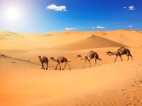 Sfeerimpressie Het betoverende zuiden van Marokko