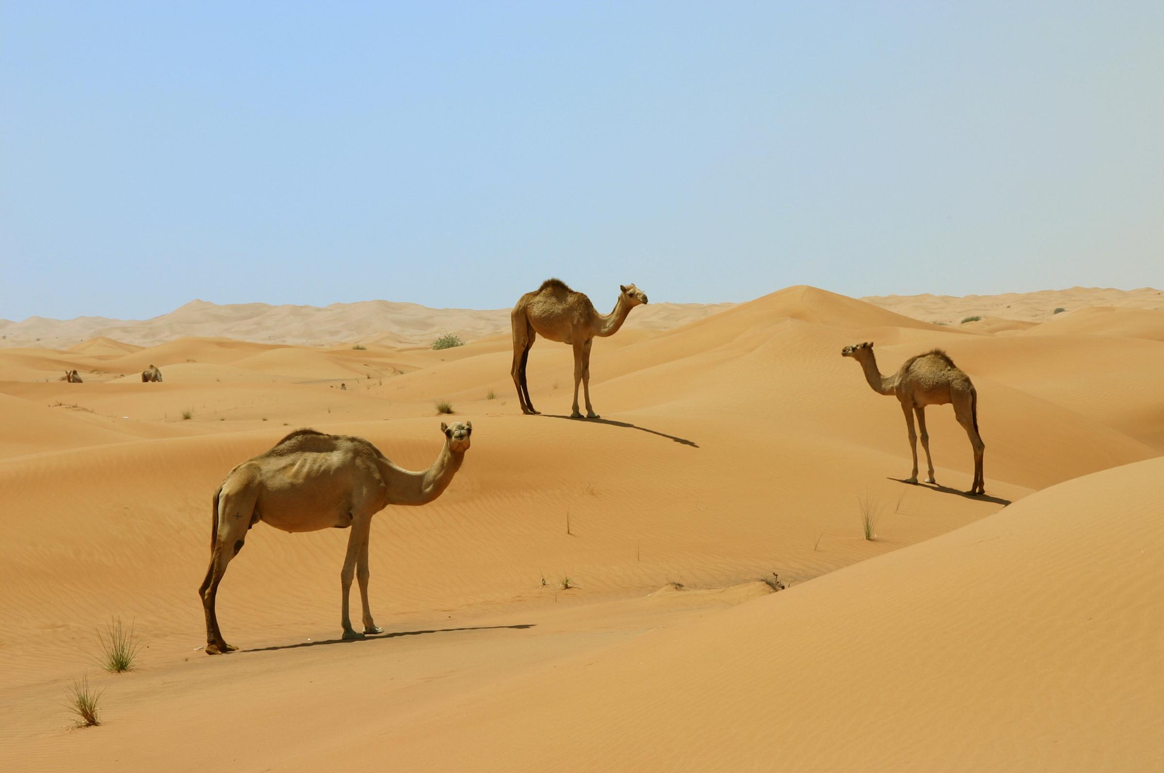 Sfeerimpressie Rondreis Oman en Dubai