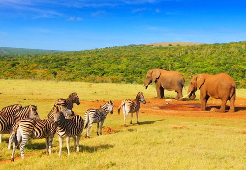 Sfeerimpressie 22-daagse single groepsreis Zuid-Afrika, Swaziland & Lesotho