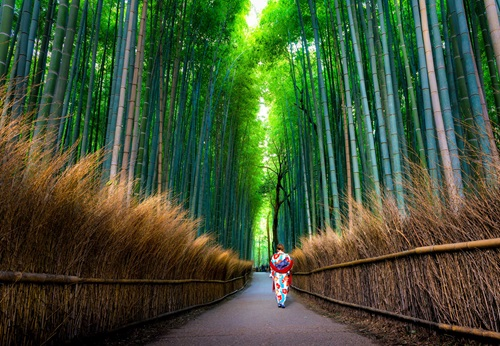 Sfeerimpressie 16-daagse single groepsreis Japan