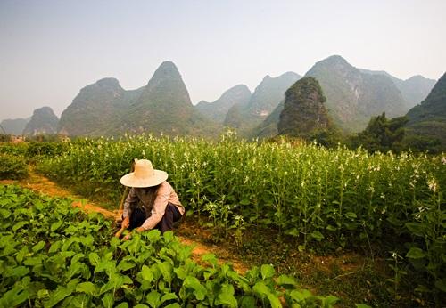 Sfeerimpressie 18-daagse groepsrondreis Wuivend Bamboe