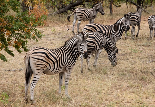 Sfeerimpressie 19-daagse privé rondreis met huurauto Ontdek Zuid-Afrika