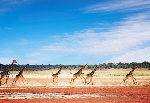 Sfeerimpressie 26-daagse groepsrondreis Zuid-Afrika, Namibië, Botswana & Zimbabwe