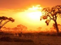 Sfeerimpressie Safari avontuurlijk Kenia