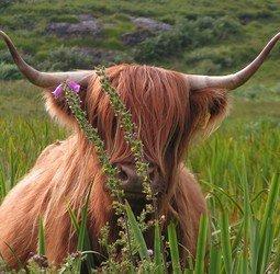 Sfeerimpressie Lochs, Hooglanden en een goed glas Whisky