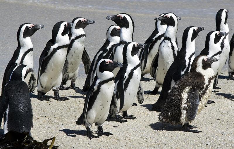 Sfeerimpressie Familiereis ZUID-AFRIKA - 14 dagen; Staan op een struisvogelei