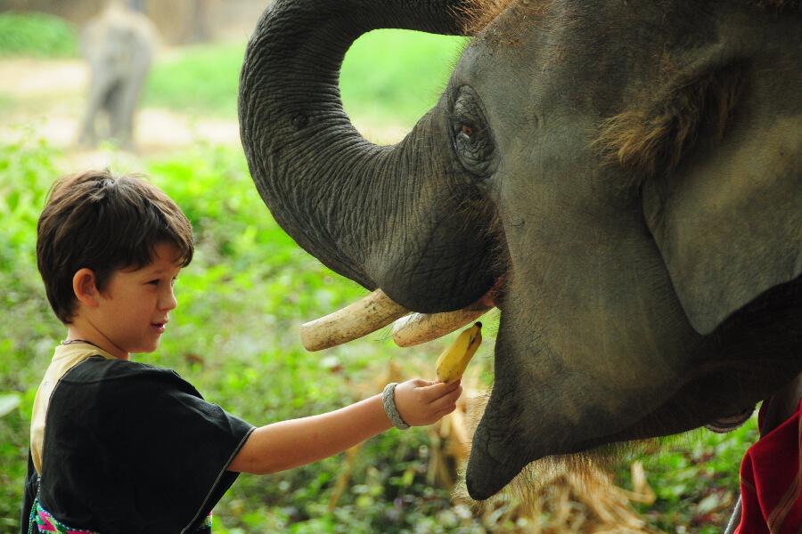 Sfeerimpressie 15-daagse familiereis Centraal- en Noord-Thailand
