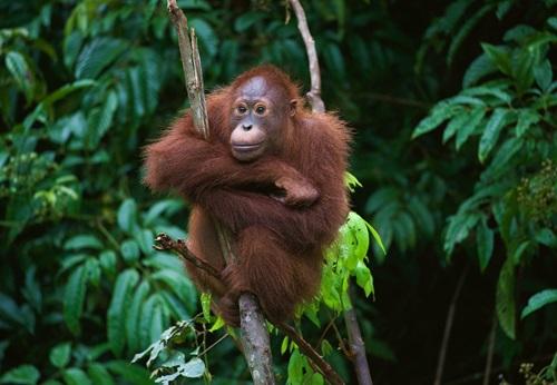 Sfeerimpressie 18-daagse groepsrondreis Maleisië - Borneo (Sarawak)