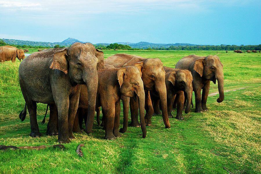 Sfeerimpressie 16-daagse familiereis Sri Lanka