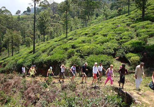 Sfeerimpressie 15-daagse single groepsreis Klassiek Sri Lanka