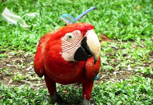 Sfeerimpressie 14-daagse privé rondreis diverse vervoerstypes Jungles van Suriname