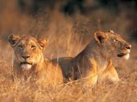 Sfeerimpressie Lodgesafari van Kenia tot Zuid-Afrika