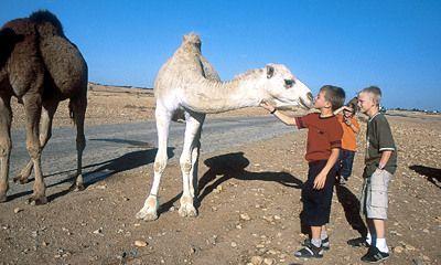 Sfeerimpressie Ronreis Egypte met de Kids