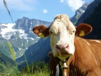 Sfeerimpressie Excursiereis Hartje Tirol