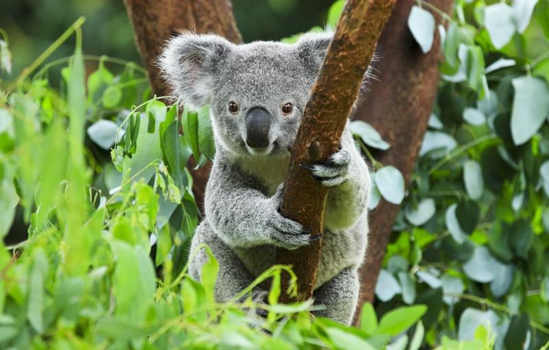 Sfeerimpressie AUSTRALIË HOOGTEPUNTEN - Land van Kangoeroes en rode aarde