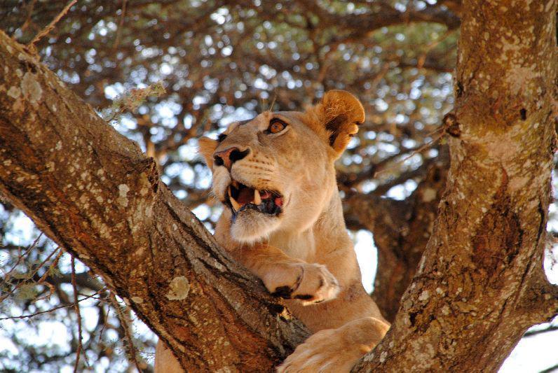 Sfeerimpressie Kenia en Tanzania: Hoeveel dieren tel jij?