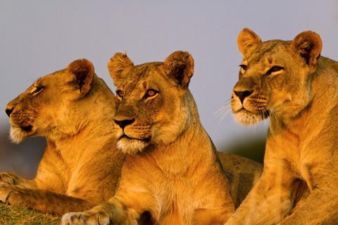 Sfeerimpressie 16-daagse safari Best of Kenya