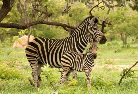 Sfeerimpressie 9-daagse safari The Mombasa Rendez Vous