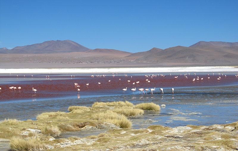 Sfeerimpressie CHILI, ARGENTINIË EN BOLIVIA - Ruige rotsen en weidse zoutvlaktes