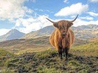 Sfeerimpressie Fly-drive Legendarisch Schotland (bed & breakfasts)