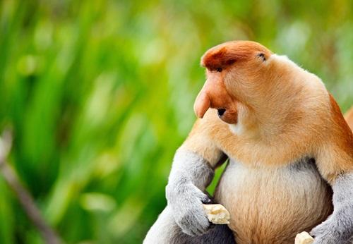 Sfeerimpressie 18-daagse groepsrondreis Maleisië - Borneo (Sabah)