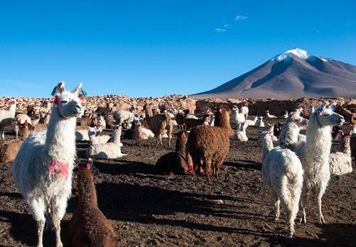 Sfeerimpressie 14-daagse familie groepsreis Ecuador: Indianen, Andes en Amazone