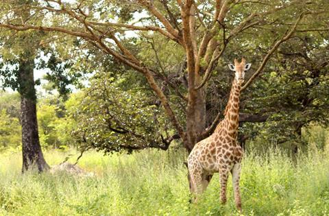 Sfeerimpressie 8-dg combinatiereis Fathala Wildlife Experience