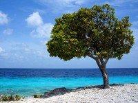 Sfeerimpressie Fly-drive Aruba, Curaçao & Bonaire